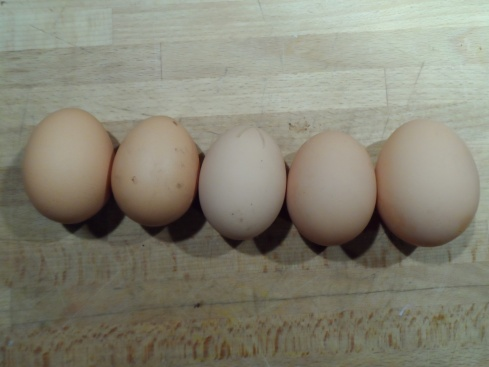 4 ordinary eggs and the FrankenEgg (it was a lovely double yolker)