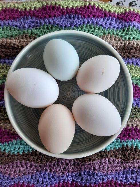 Five fresh laid eggs, all slightly different muted colours, in a bowl, sitting atop a stripey crocheted blanket